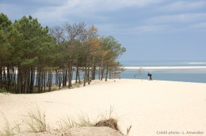 Foret-dunes aquitaine_00026443_credit photo
