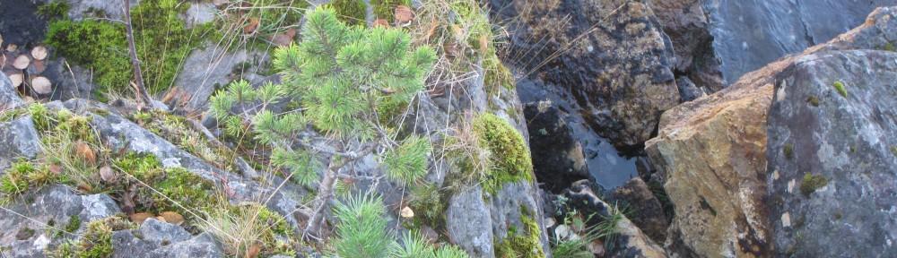Ekolog – conseil en gestion durable