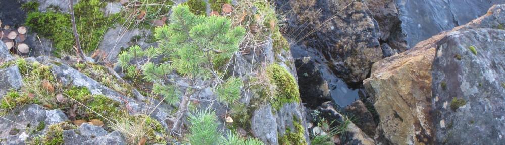 Ekolog – sustainable management consultancy